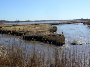 A view of the Rumney Marsh in Revere.